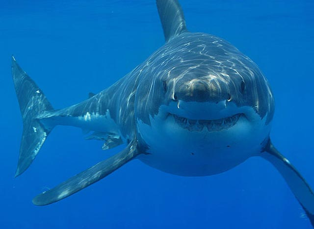 nam mo thay ca map - Giấc mơ thấy cá mập cắn người nhắc nhở bạn không nên lo chuyện bao đồng đề bị vạ lây