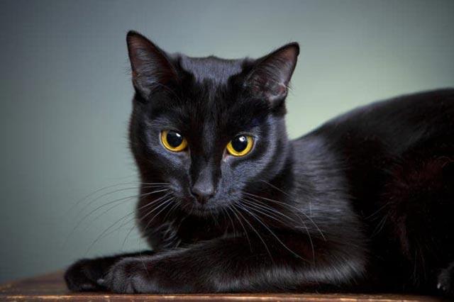 thay meo den danh so may - Mơ mèo đen nhìn mình là lời nhắc nhở về hành động, lời nói của bạn trong tương lai