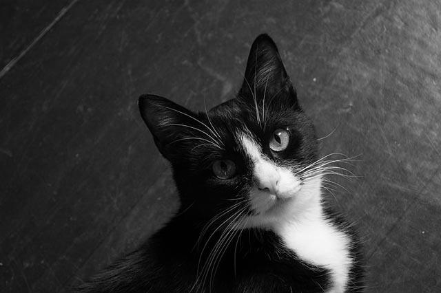thay meo den danh so may - Mộng chiêm bao mèo đen trắng chứng tỏ bạn đang đứng giữa 2 lựa chọn rất khó khăn