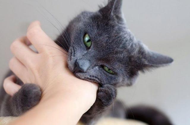 thay meo den danh so may - Mơ thấy mèo đen cắn đánh con gì ? Ý nghĩa giấc mơ mèo đen cắn